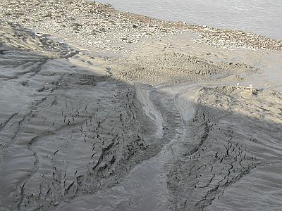 mud with rivulets of water running through