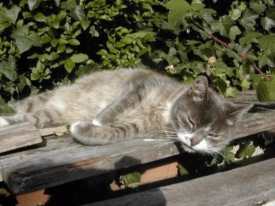 grey and white cat lying on planks of wood