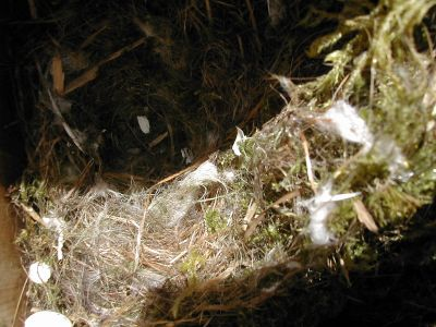 nest out of wooden box