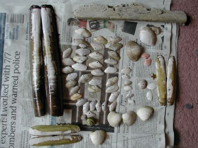 lots of shells sitting on newspaper