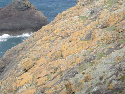 Orange lichen-covered cliffs on Skomer island