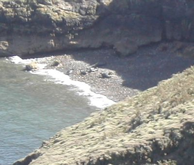 Seals on beach on Skomer island