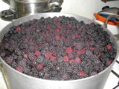 stockpot full of blackberries