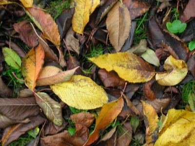 colourful leaves on grass