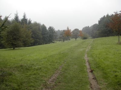 A path in Pontypool Park